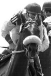 Photo of Horse Race Original