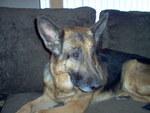 Adopting a sick dog changed Bobbi Jo Swartz's life forever.