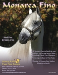 Classic Fino Stallion