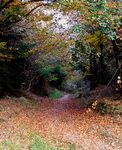 A country path through Thomas Hardy country, close to his birthplace, Dorset, UK.
