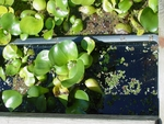 People are using our black planters in their ponds to keep aquatic plants in place.