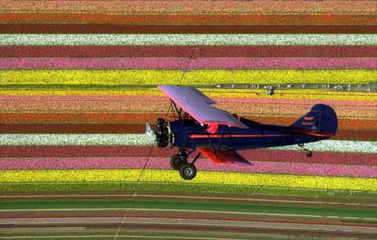 Birds Eye View Flowers Biplanes Offer Bird's Eye View