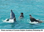On Friday March 11th, 2005, twelve (12) year old jazz prodigy Matt Savage gets a standing ovation from two dolphins of Curacao Dolphin Academy