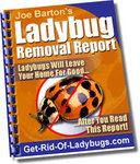 Ladybug Removal Report