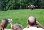 Elk Viewing in the WILDS of Pennsylvania