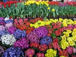 Flowers of vibrant colors