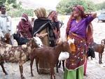 Villagers recieving goats
