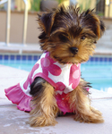 Daisy Sparkle Dress