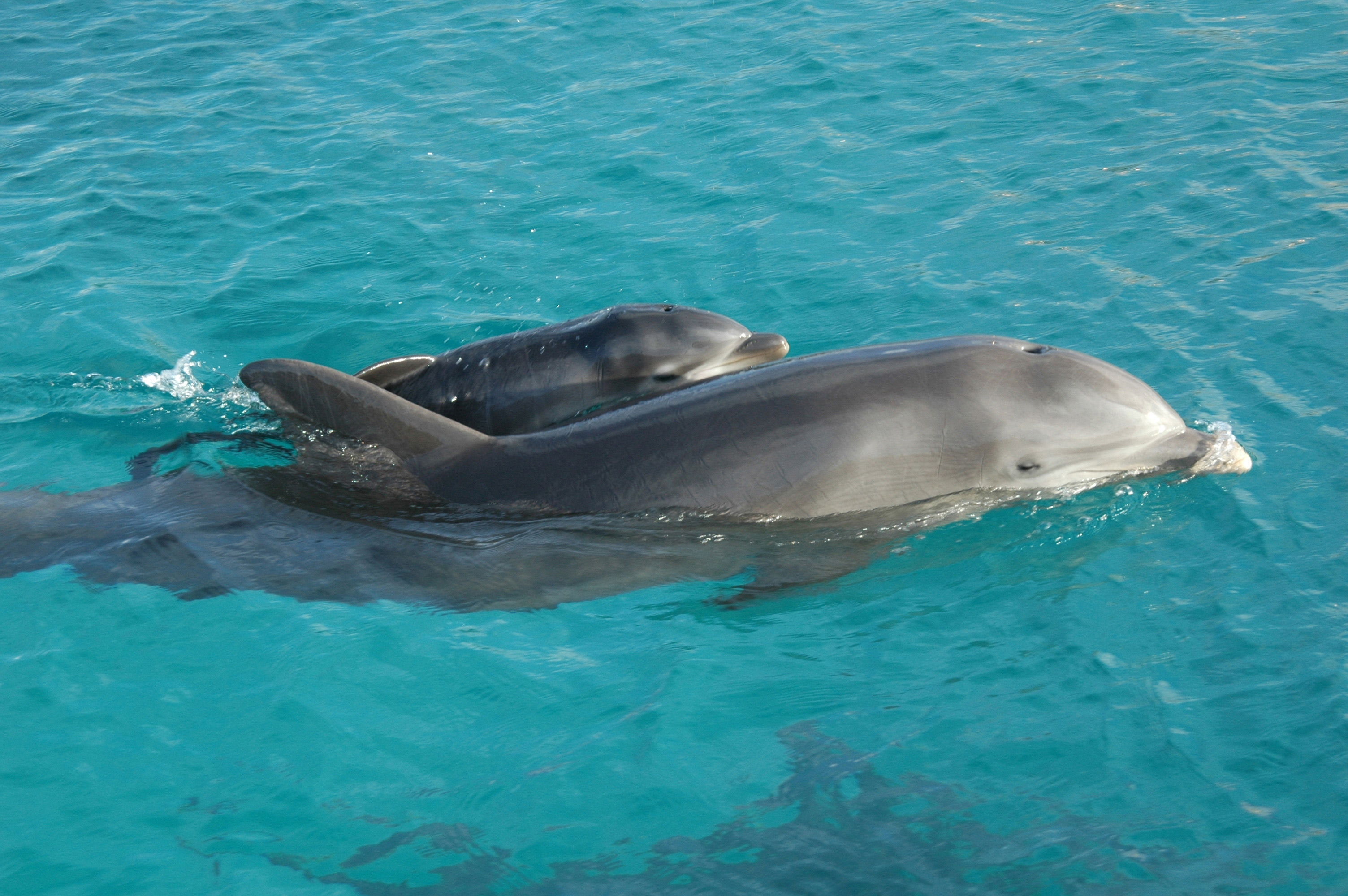 11 Facts About Dolphins That Will Prove They Are A Vicious