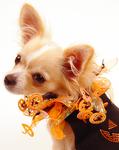 Pumpkin Party Collar