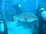 Belize Scuba Diving Trips