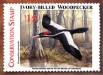 Ivory-billed Woodpecker Conservation Stamp