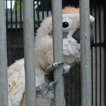 Cockatoo Waiting at Wild Animal Rescue Center