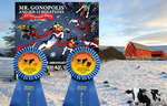 """""""Mr. Gonopolis"""" flying Christmas cow book sweeps Holstein Literature awards!"""