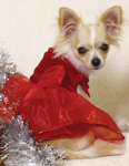Little Red Party Dress