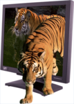 Virtual Window 17 Tiger