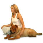 Meditating with a Chow-Chow to mark the Chinese Year of the Dog.