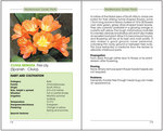 "Sample pages from ""Mediterranean Garden Plants"""