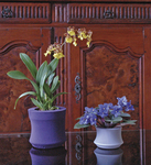 Iris Pot Covers from Kinsman Company