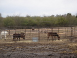 Corral for Rescued Horses
