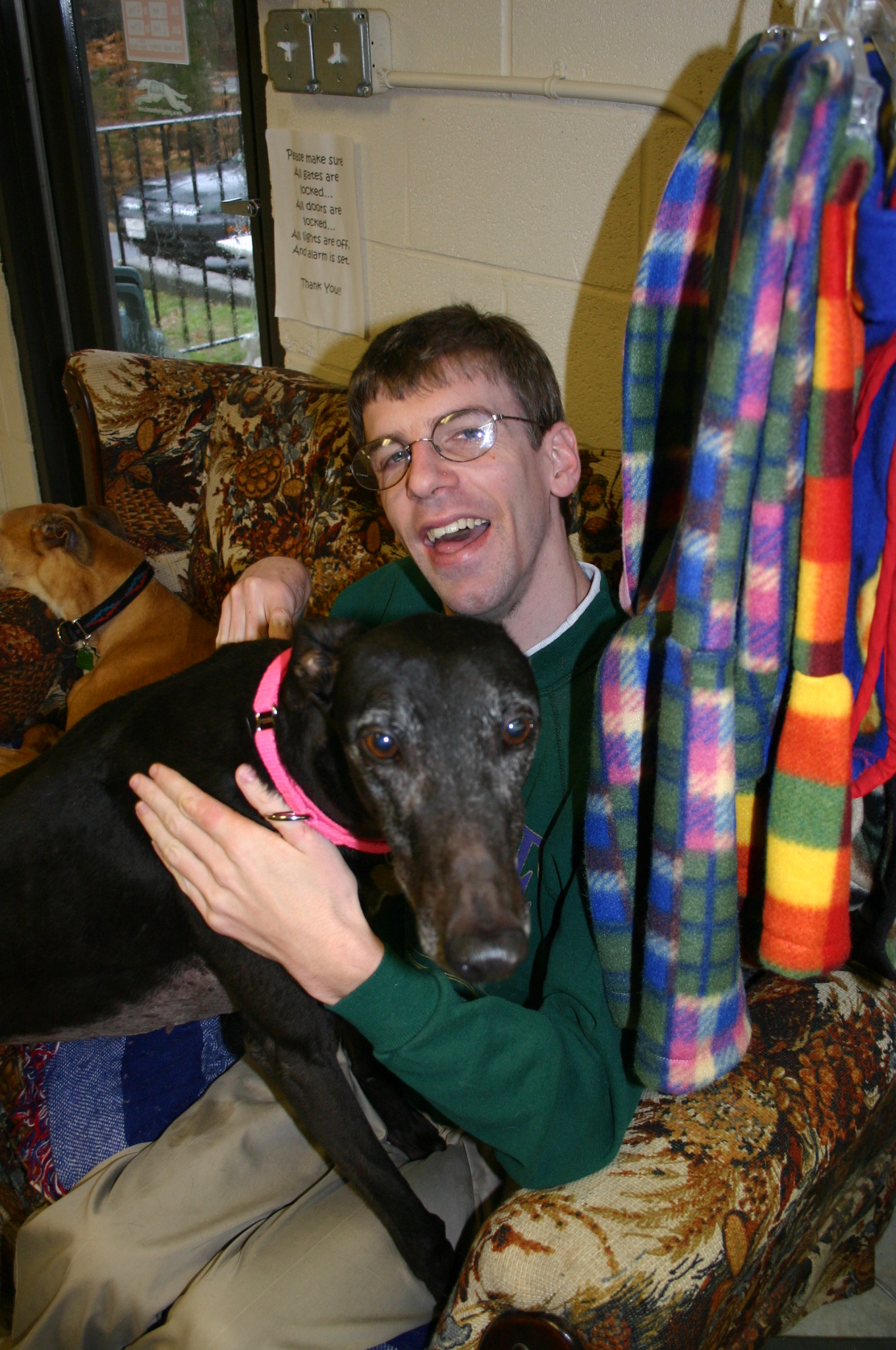 Project racing home greyhound adoptions