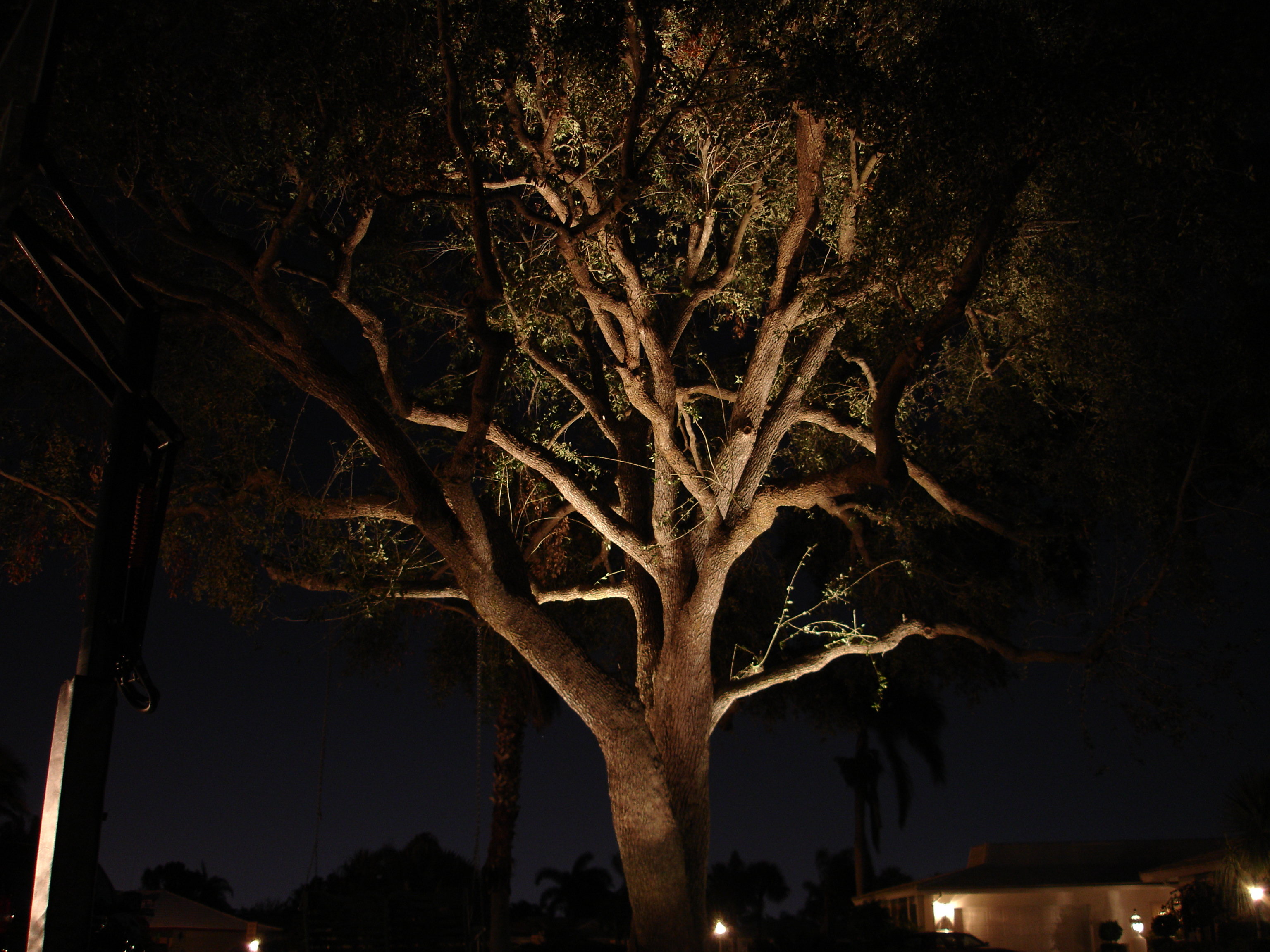 Outdoor light trees democraciaejustica landscape tree lights palm tree lighting archives aloadofball Image collections