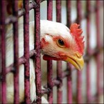 The question of an avian flu pandemic is no longer 'if' but 'when.'