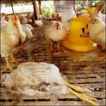 The government should anticipate the eventual arrival of an avian flu pandemic.