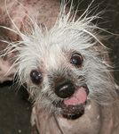 Rascal, The World's Ugliest Dog