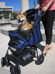 Happy Trails Pet Stroller from JustPetStrollers.com