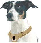 Dog collar customized with gemstones by Couture Accessories.