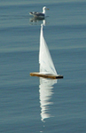 Seagull & Yacht