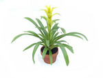 Viva! Plant Protector net is decorative