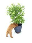 Viva! Plant Protector net 3