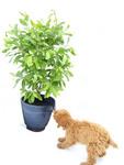 Viva! Plant Protector Net Under Attackt