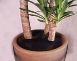 Viva! Plant Protector Net secured by twist tie
