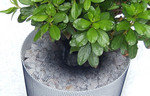 Viva! Plant Protector Net 4