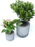 Viva! Plant Protector Net 5
