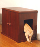 Cat with Refined Litter Box