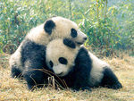 Joli Bebe Boutique Fights to Save Our Pandas