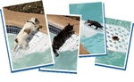 Skamper-Ramp Protects All Pets and Critters From Drowning