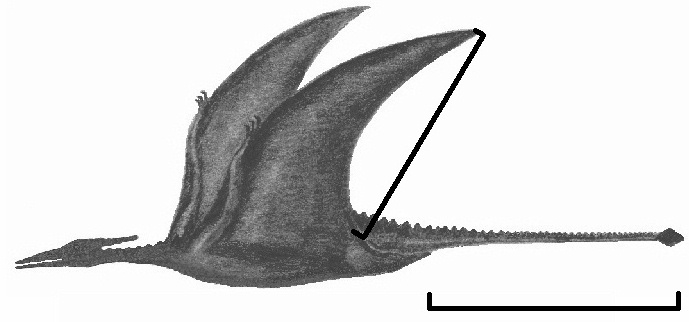 Information about the Pterosaur