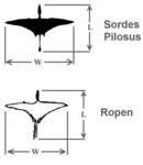 Sordes Pilosus pterosaur and the ropen