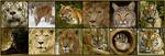 Bed & Big Cats Turpentine Creek - Eureka Springs, AR