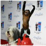 Crystal the Capuchin monkey from Shaggy Dog at SKYBARk