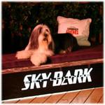 Shaggy Dog chillin' at SKYBARk