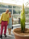 Visitors are welcome to see -- and smell -- the world's largest and stinkiest flower at Brookyn Botanic Garden