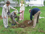 Planting the first adoptree