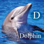D- Dolphin ceiling tile
