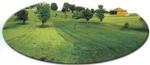 Gotta-Gro applied to RH side of Missouri Lawn